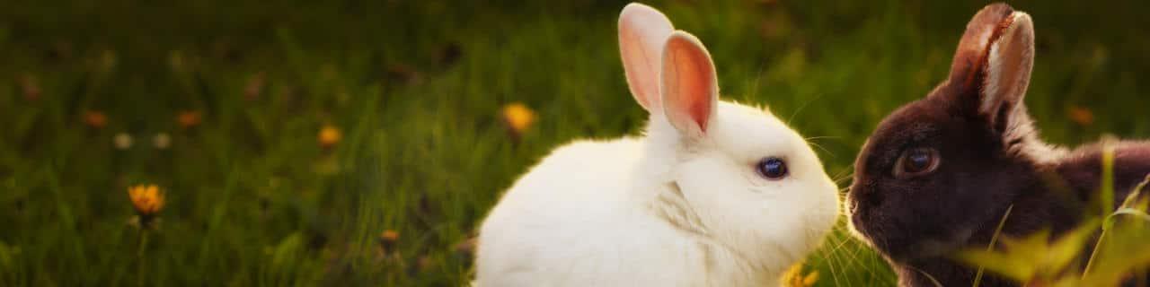 Zwei Kaninchen auf einer Wiese