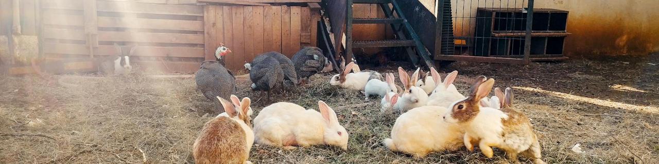 Kaninchenhaltung: Kaninchen in einem Freigehäge