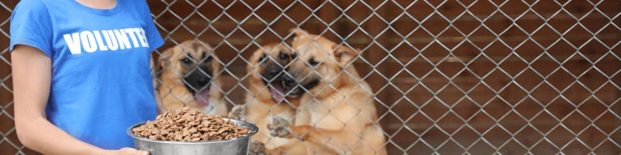 Eine Frau hält eine Schüssel mit Futter vor einem Käfig mit Hunden in einem Tierheim.